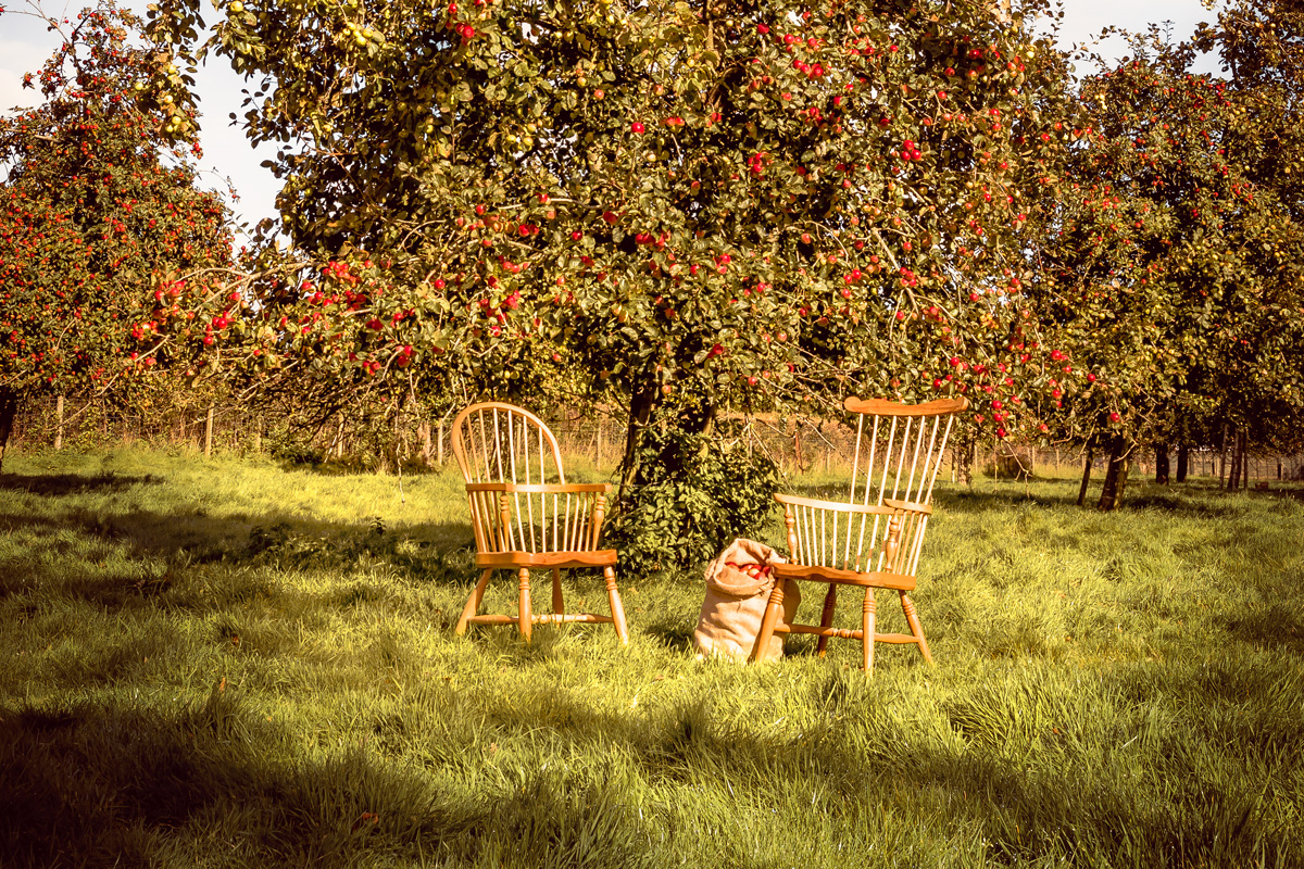 Windsor-chair-orchard