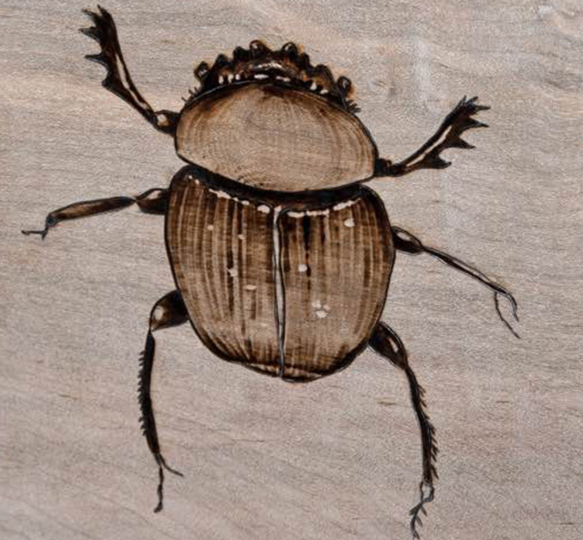 June Bug created by Ben Beddows